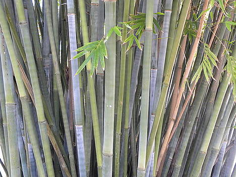 Bambo  by Anna Baker