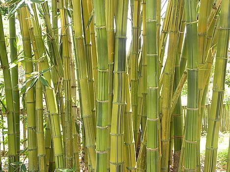 Bamboo by Anna Baker