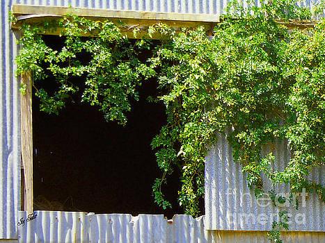 Barn Windowbox by Joy Tudor