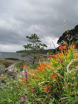 Beara Wildflowers by Sheila Rodgers