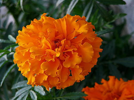 Beautiful In Orange by Victoria Sheldon