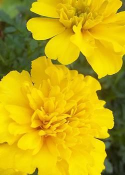 Beauty in Yellow by LillyAnn Venturino