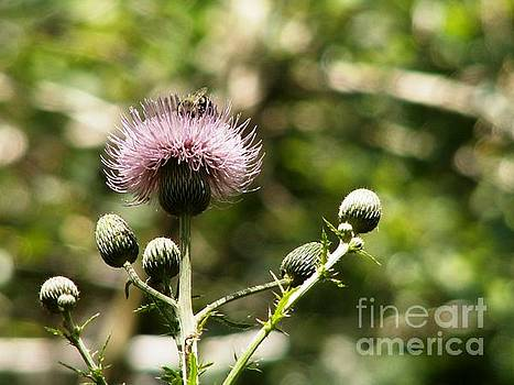 Bee on a Thistle by Theresa Willingham