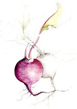 Beetroot by Karen  Colenso