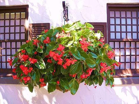 Begonia by the window by Anna Baker