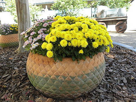 Big Pot Of Flower by Anna Baker