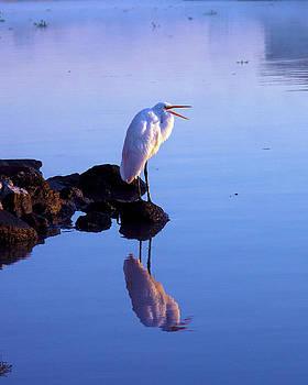 Bird on the Bayou by Gary  Taylor