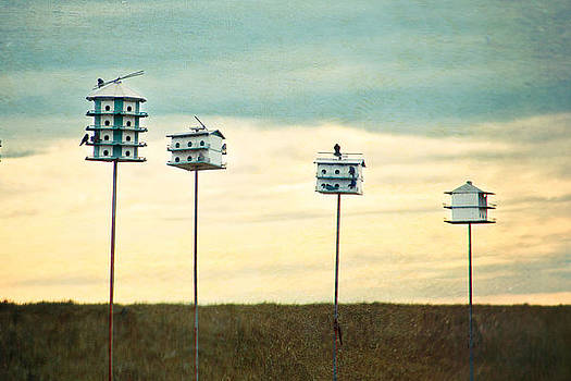 Birdhouse Row by Stacey Granger