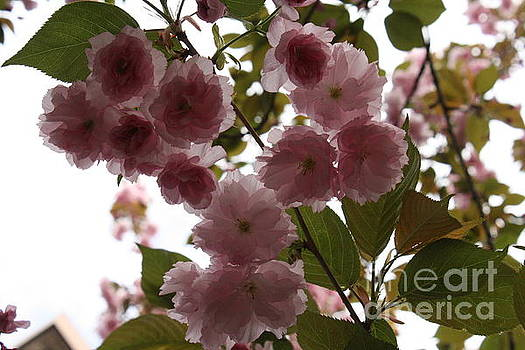 Blossoming  by Lea Cypert