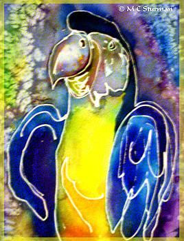 Blue Gold Macaw by M C Sturman
