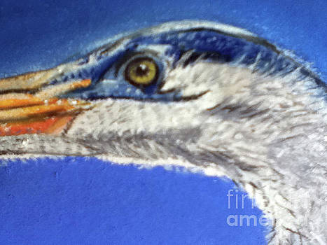 Blue Heron Close-up II by Teresa Vecere
