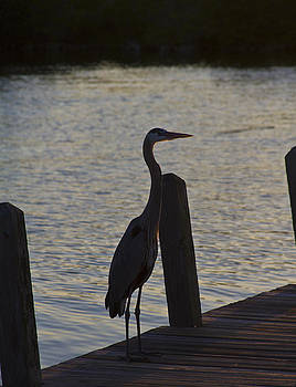 Blue Heron no sunset by Nathan Rogers