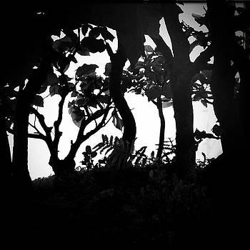 Bosque encantado by Jose Luis Barcia Fernandez