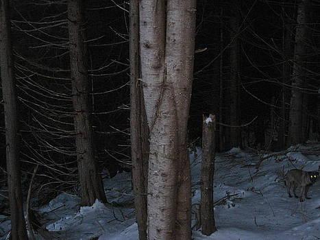 Braided Tree by Shawn Hegan