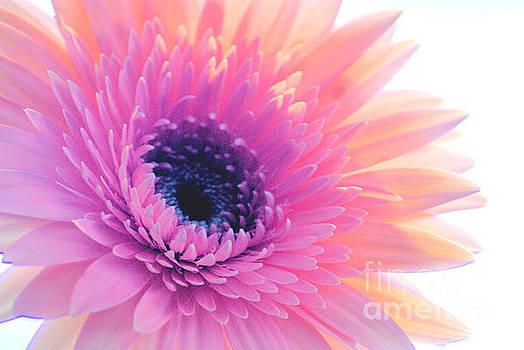 Bright Gerbera by Wendy Riley- Athans