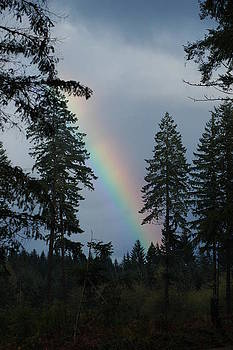 Bright Rainbow by Wanda Jesfield