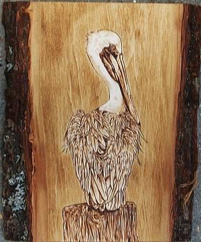 Brown Pelican by Bob Renaud