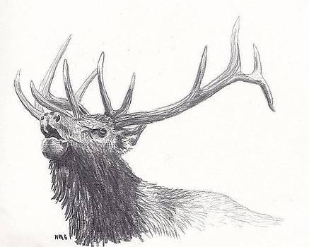 Bull Elk by Nicole Grattan