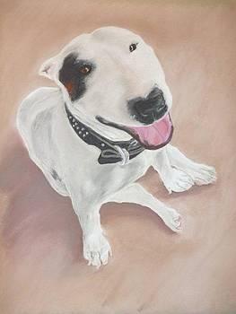 Bull Terrier by Greg  Curtis