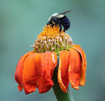 Busy Bee by Marilyn West