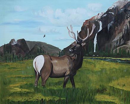 Call of Nature by Carolyn Ardolino