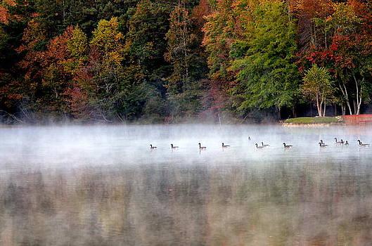 Canada Geese In Georgia... by Tanya Tanski