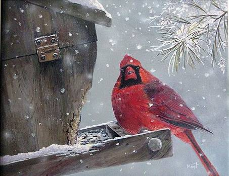 Cardinal a Feeder by Margit Sampogna