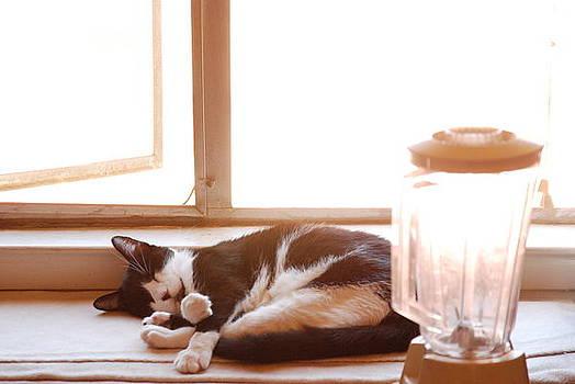 Cat and Blender by Cynthia Jones