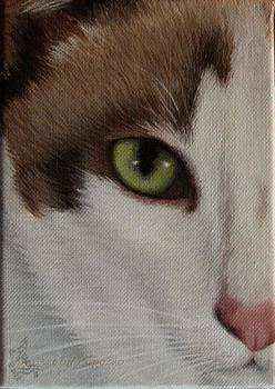 Cats Eye by Kathie Papasso