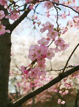 Cherry Blossom Time by Carol Kinkead
