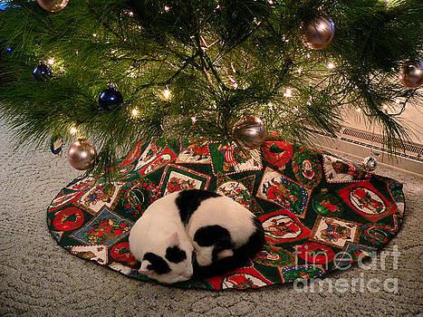 Christmas Kitty by Denise Jenks