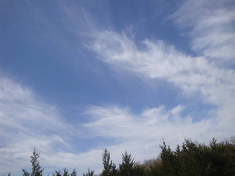 Cirrus Clouds by Tonia Darling