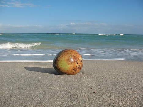 Coconut On The Beach by Tony Payne