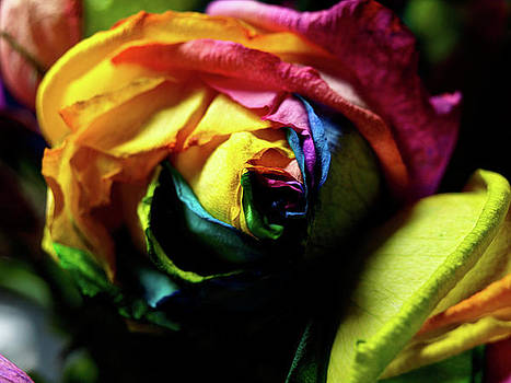 Color Explosion by Valeria Donaldson