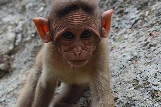 Cute Monkey by Siddarth Rai