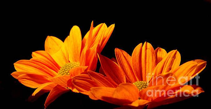 Daisies n Autumn by Wendy Riley- Athans