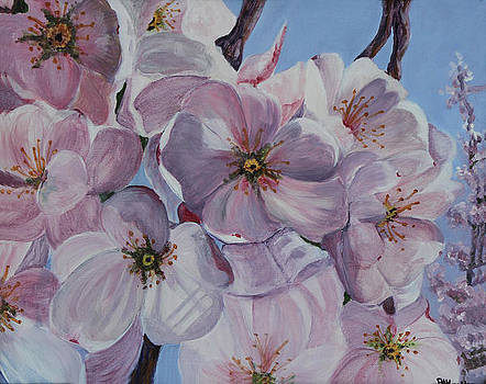 DC Cherry Blossoms by Pauline  Kretler