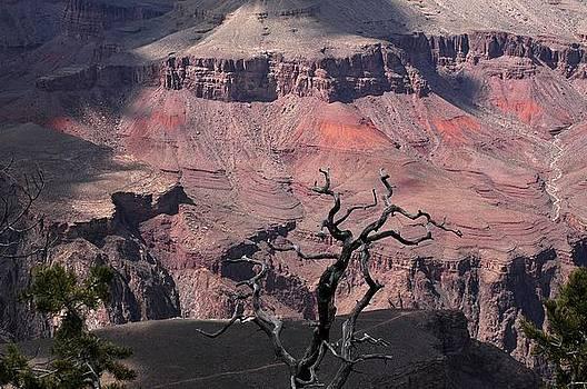 Dead Tree at the Canyon by Wanda Jesfield