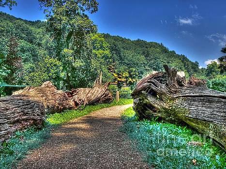 Dead Wood Road by Alfredo Rodriguez