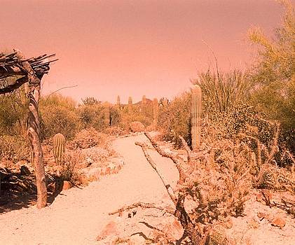 Desert by Paul Thomley
