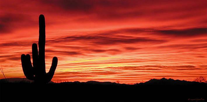 Desert Sunset by Walt Jackson