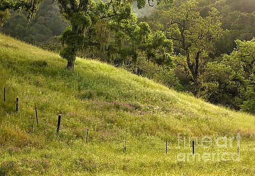 Dewy Pasture at Dawn by Matt Tilghman