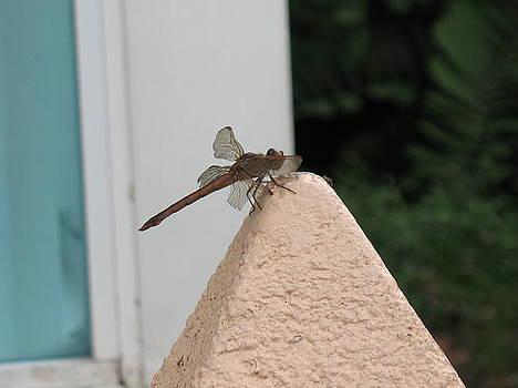 Dragonfly On A Wall by Tony Payne