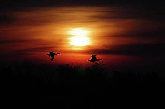 Ducks In Flight by Donnie Smith