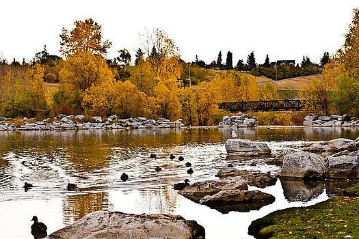 Ducks On Water  by Tamara Hamula