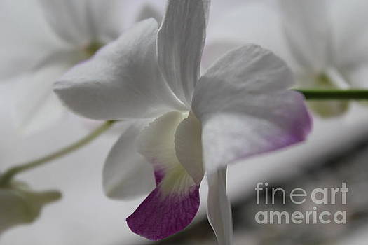 Elegant Orchid by Theresa Willingham