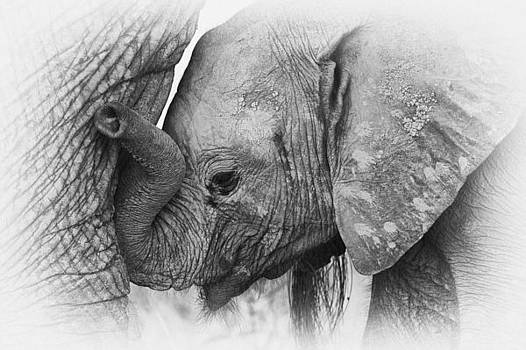 Elephant calf in black and white by Johan Elzenga