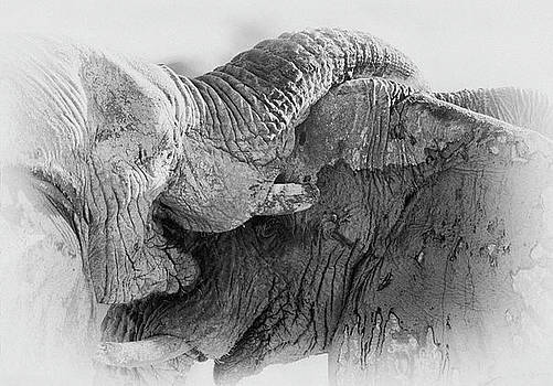 Elephant fight in black and white by Johan Elzenga