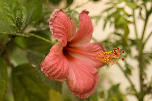 Exotic garden 19 by Looknon Pix