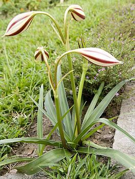 Exotic garden 23 by Looknon Pix